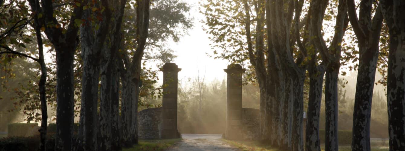Château Guiraud: création d'une websérie